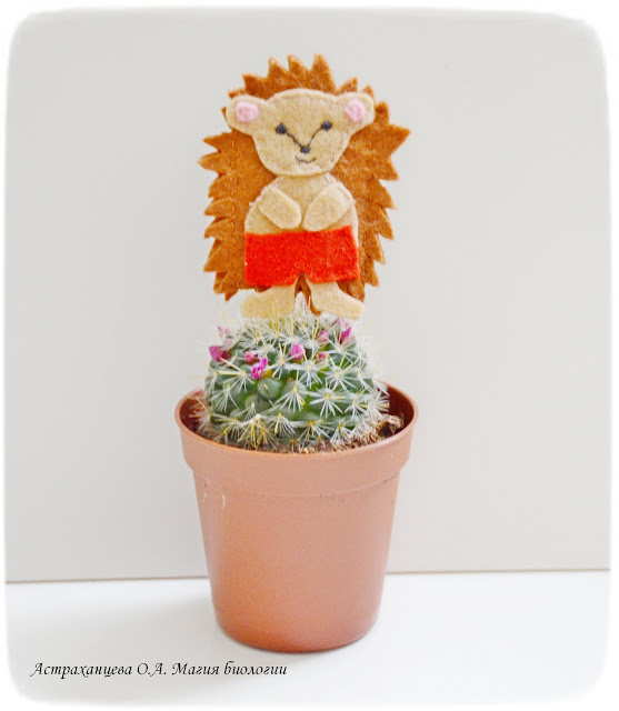 cvetok-kaktusa-palchikovaja-irgrushka-ezhik