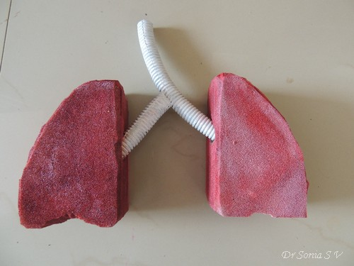 Cards ,Crafts ,Kids Projects: Making a Respiratory System ...