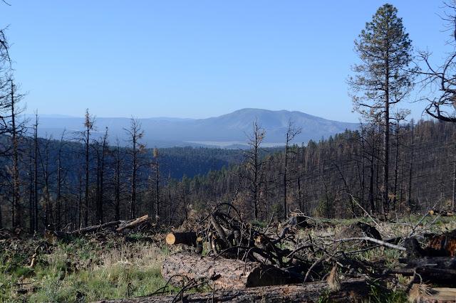 Elk Peak across Collins Park