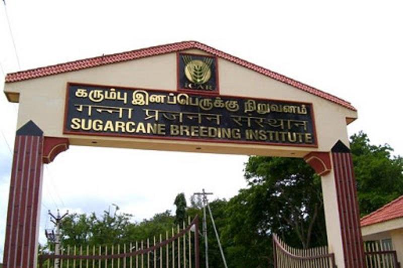 Sugarcane Breeding Institute develops drought-resistant