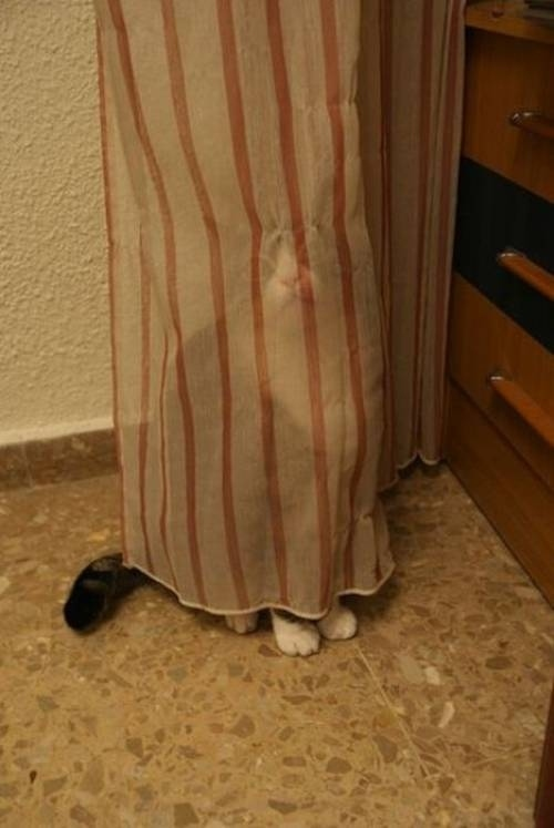 11 gatos que se esconden de ti