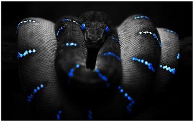 صور خلفيات ثعابين مميزة HD