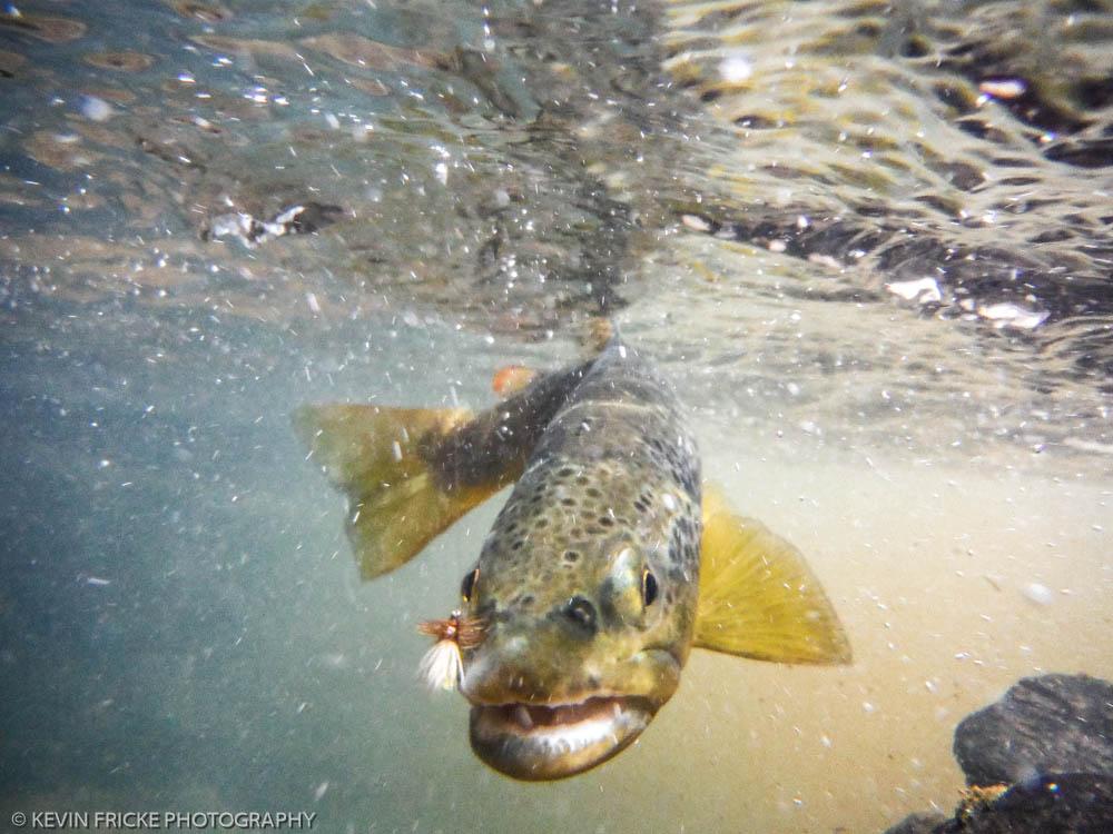 100+ West Clear Creek Fishing – yasminroohi