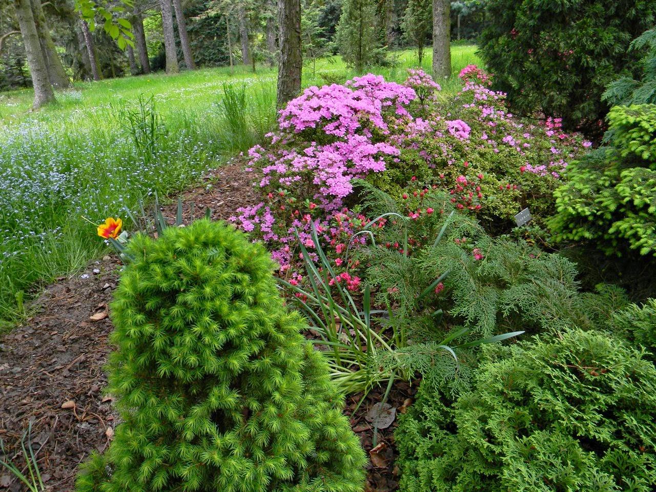 kórnickie arboretum, rośliny, przyroda, co warto zobaczyć w Kórniku