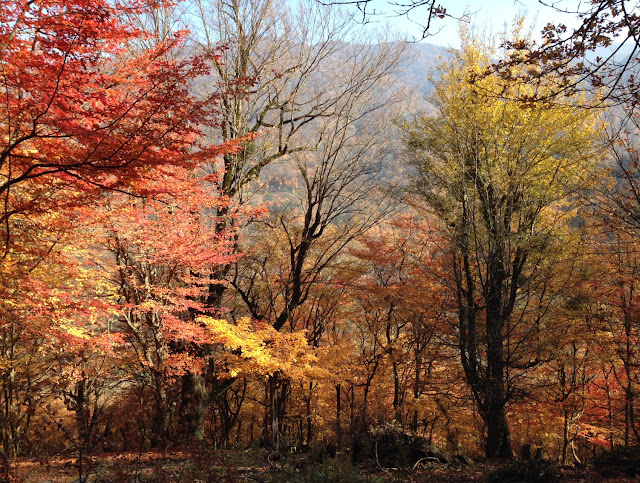 The autumn leaves in Nahar Khoran Foerst of Gorgan.