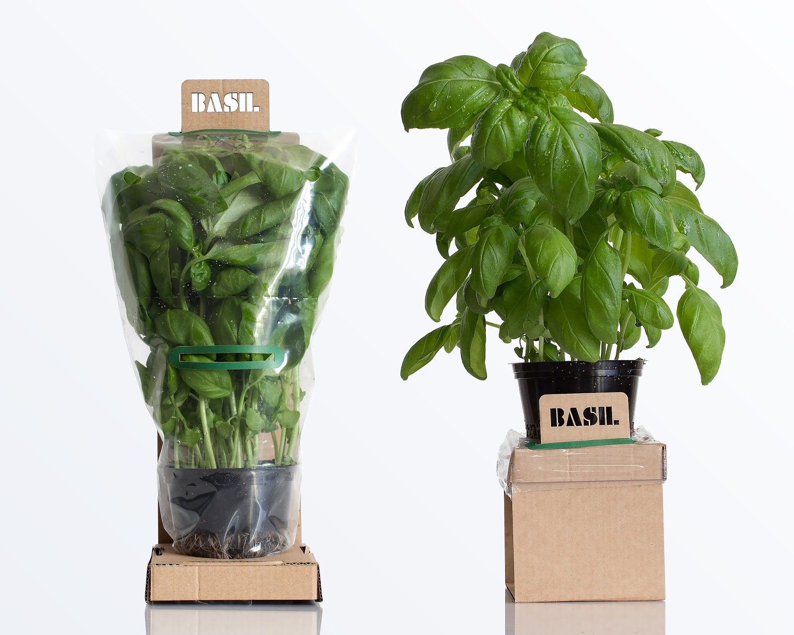 Self Watering Herbs Student Project On Packaging Of The