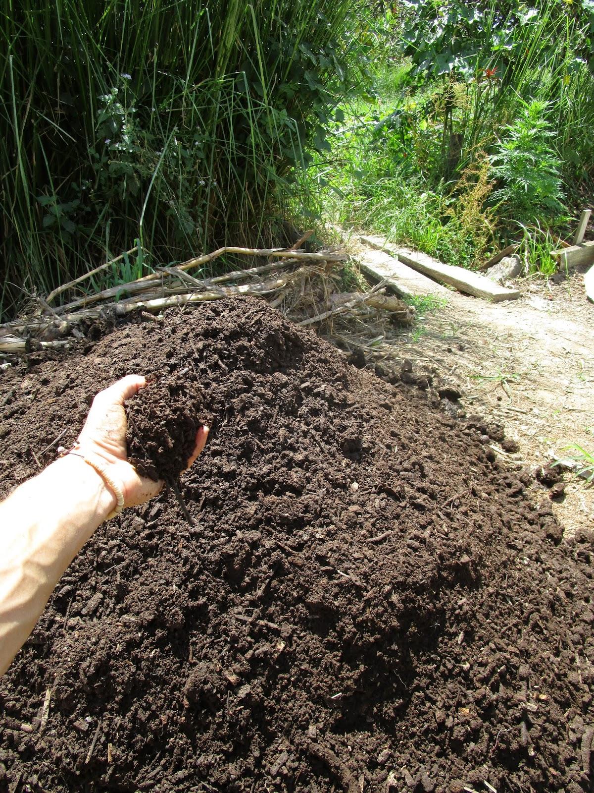 Biogas sludge turns into rich soil at PRI Sunshine Coast