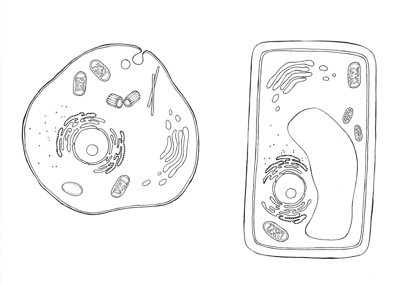 Sarah Fogg Illustration Cells Bacterium Virus