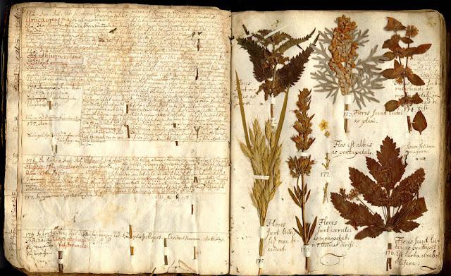 самодельный гербарий
