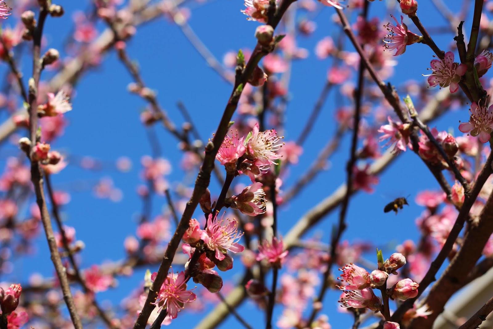 flores com uma abelha