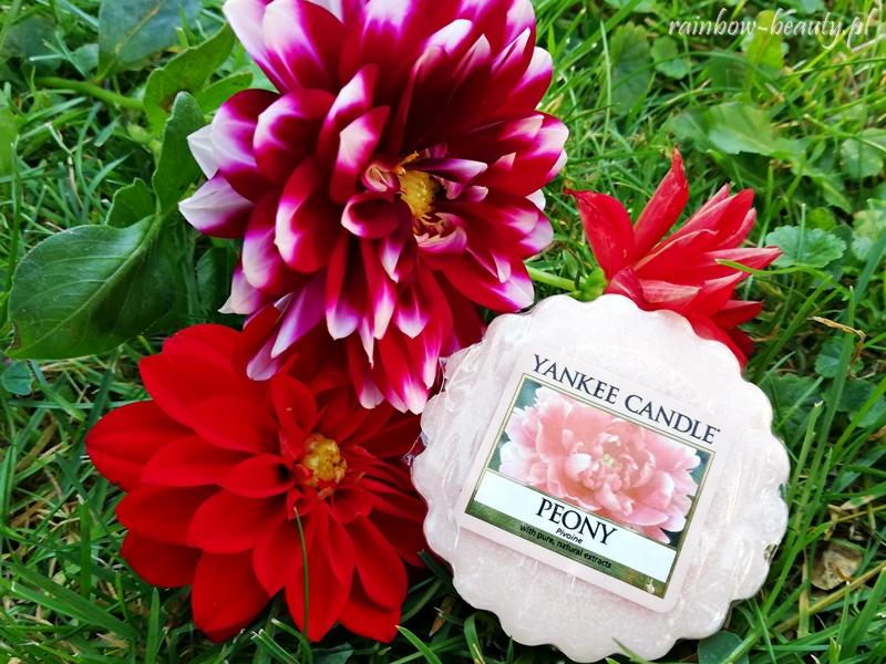 yankee-candle-o-zapachu-piwonii