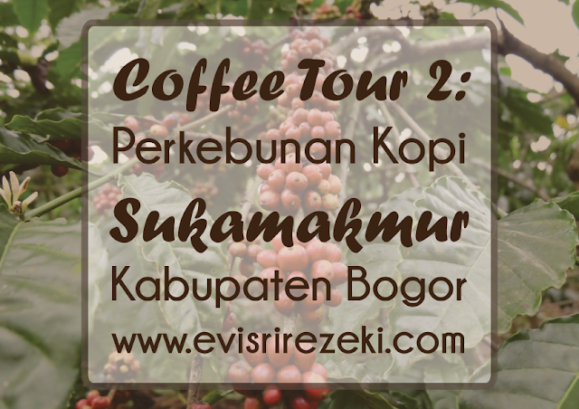 Coffee Tour 2: Perkebunan Kopi Sukamakmur, Kabupaten Bogor