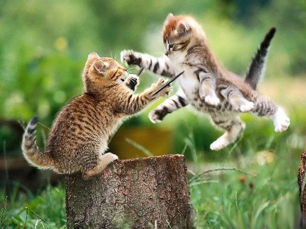 Cartoon Funny Funki Wild Animals Fighting