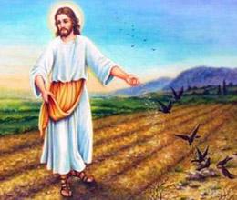 las aves parabola de jesus