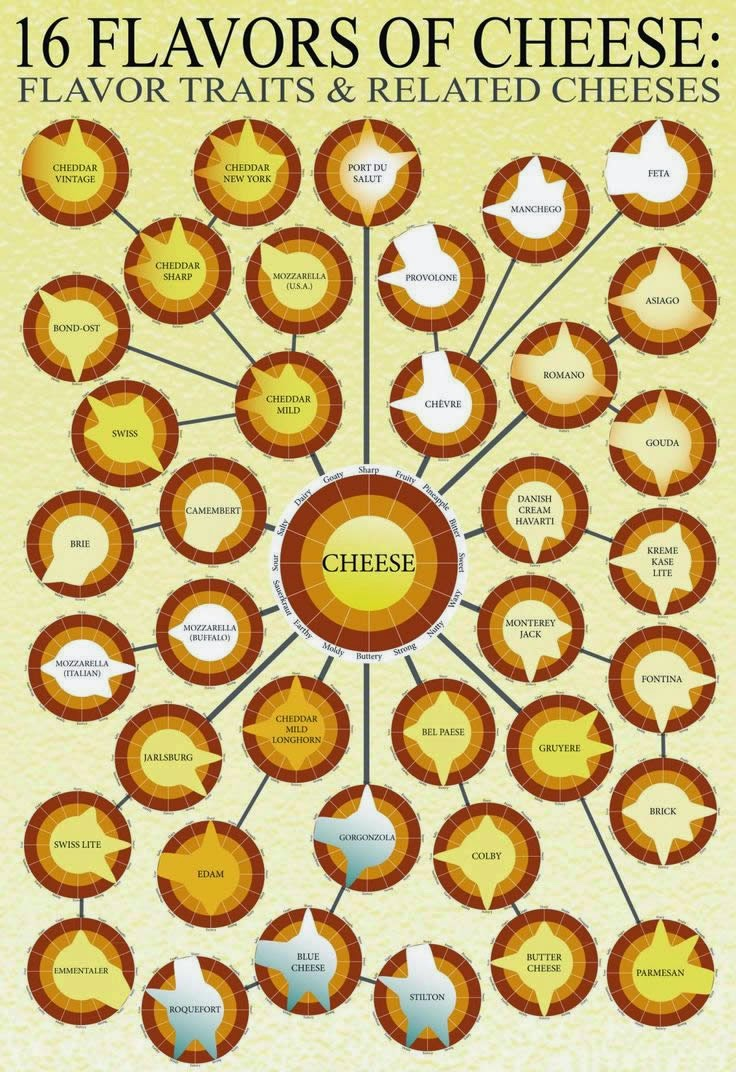 Infographic flavors of cheese