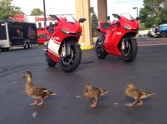 It's important to get all your Ducs in a row...
