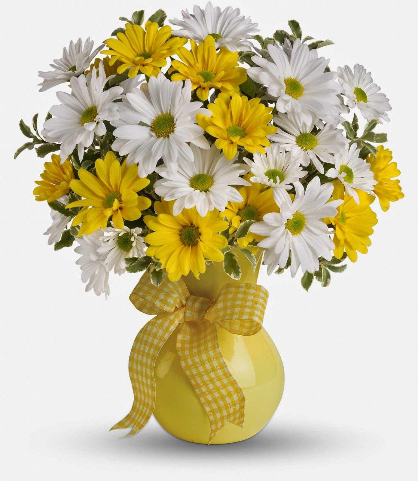 yellow-white-daisies-bloomex
