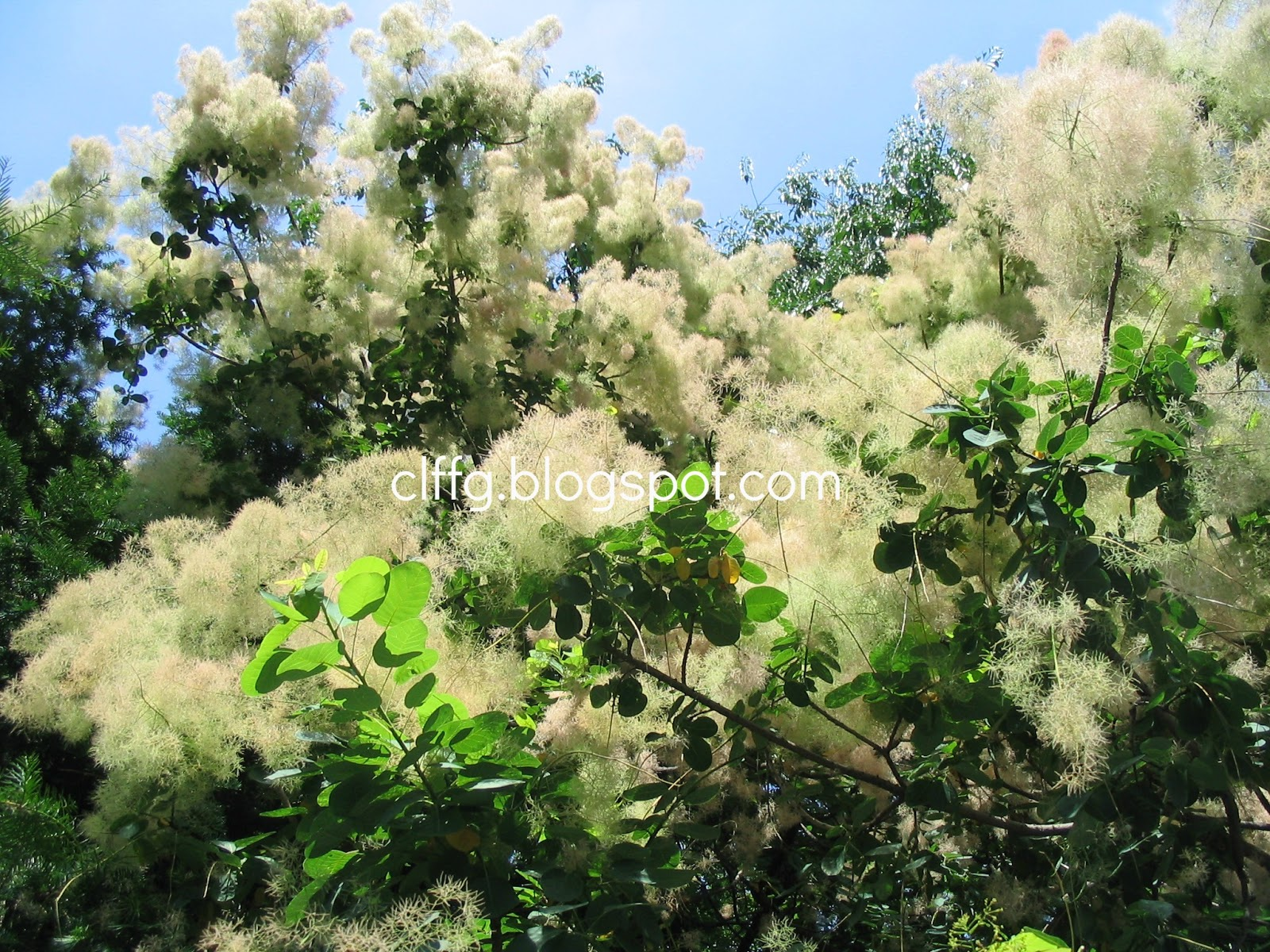 Summer White Flowering Trees Whats Your Florida Tree Iq From