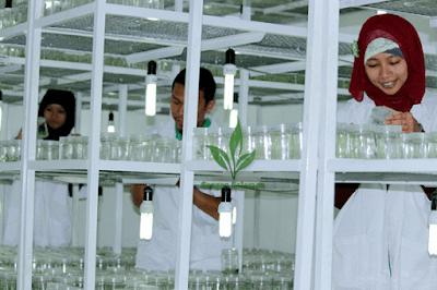 lab-Sengon-solomon-5