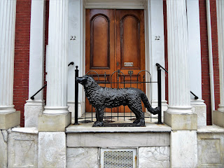 charity dog