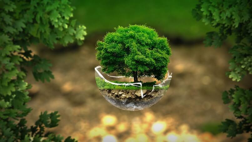 negocios sustentables y ecológicos