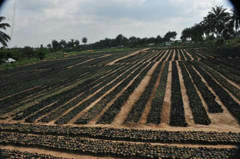 Abia State embarks on Agriculture Revolution