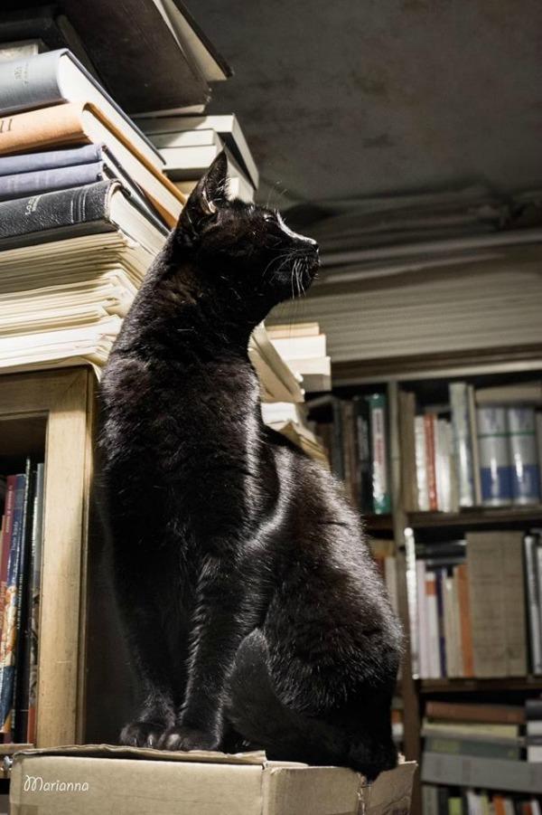 gatto dominique