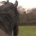 6 лет не виделись лошади. Более трогательную встречу сложно представить! Смотреть всем