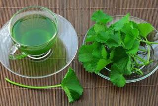 té de hojas de apio