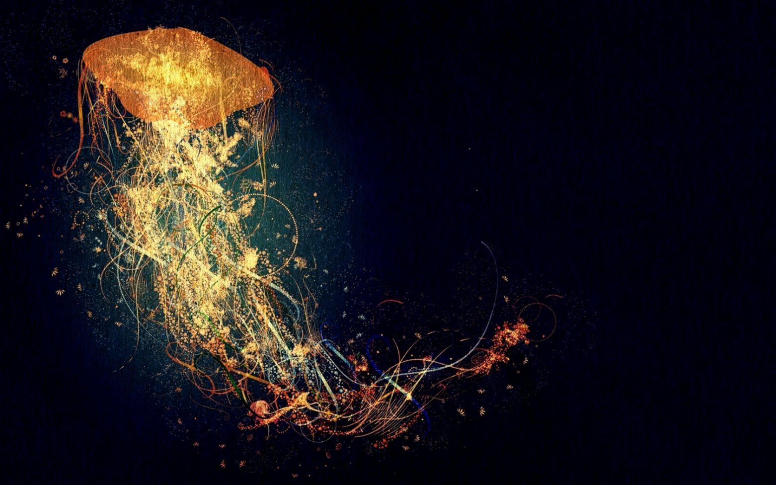 jellyfish hd wallpaper wallpapers