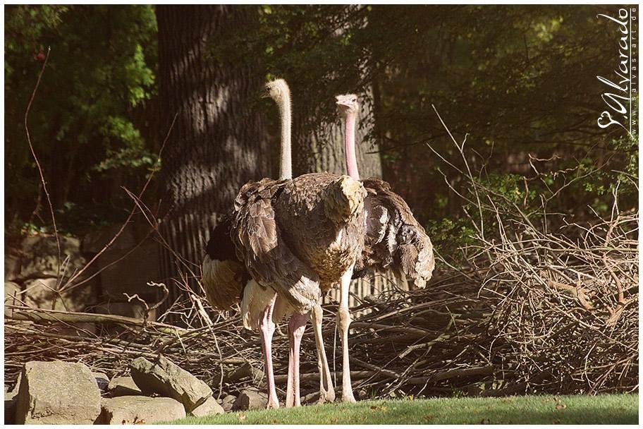 Salvas Artde Erlebnis Zoo Hannover Teil Iv