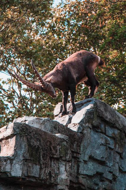 artis-zoo-2-poracci-in-viaggio-credit-to-@wanderlustabout