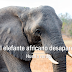 El elefante africano desaparece