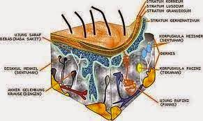 Pengertian Pigmen dalam Biologi