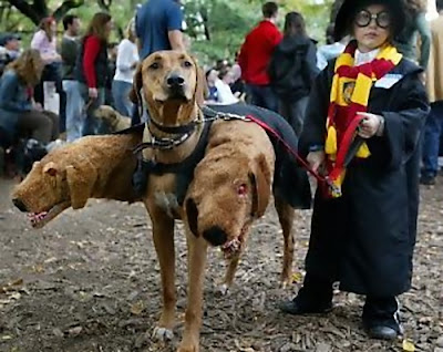 12 Creative and Unusual Dog Costumes (12) 3