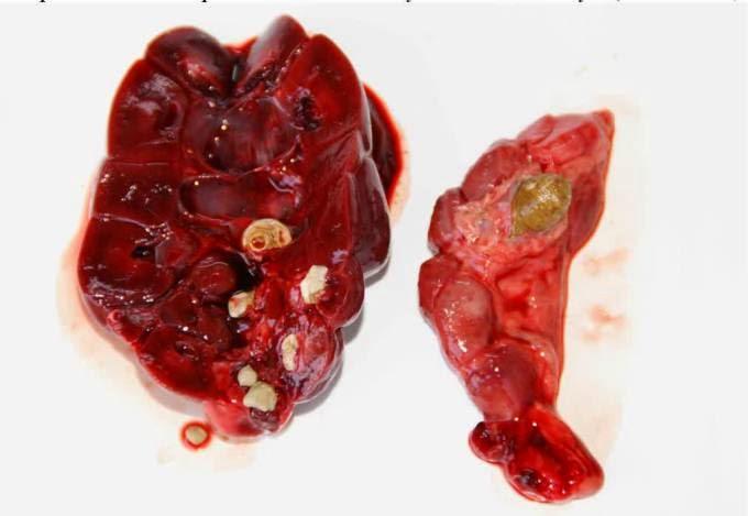 Khasiat Tanaman Obat Herbal : Cara Alami Mengobati Batu ...