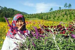 Sapo Juma Tongging, Taman Indah di Dekat Surga Dunia