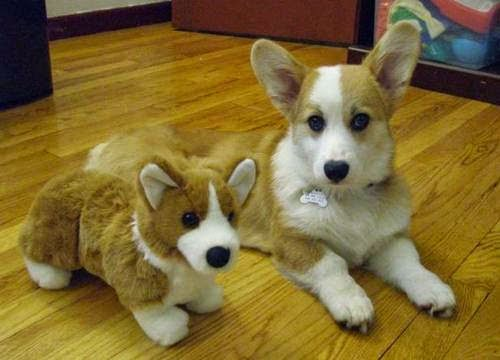 adorable animals with toy versions-4
