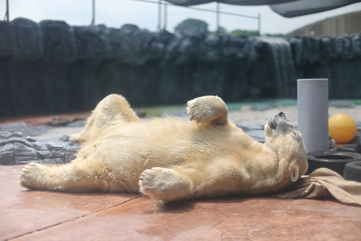 The bear's activity levels have fallen over the past three months and he now prefers resting over interacting with his keepers, a statement said.