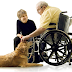 How Does Pet Therapy Helps In Healing An Illness?