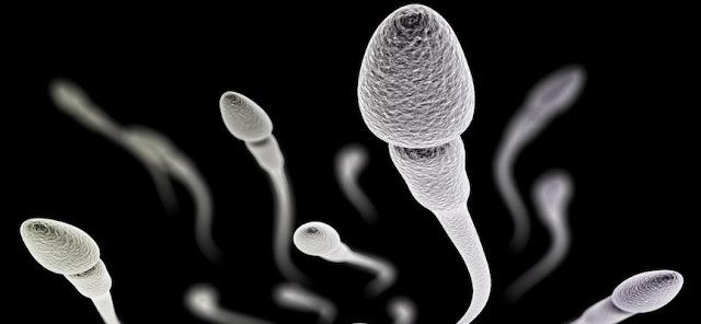 Cara Agar Sperma Menjadi Lebih Subur dan Sehat, Pria Harus Memperhatikan Hal-Hal Berikut