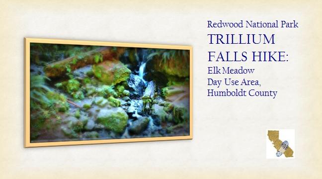 Hiking The Golden State Redwood National Park Trillium Falls Hike