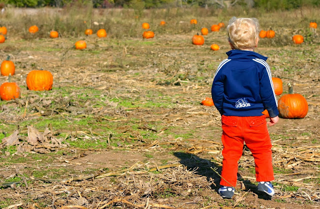 Kansas City pumpkin patch with kids