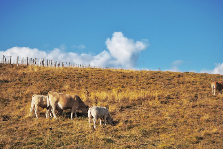 Week-end nature et détente dans le massif du Sancy