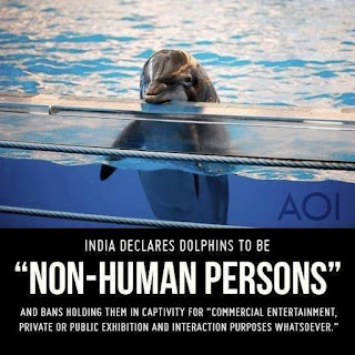 I downloaded this image of a captive dolphin a number of years ago, can't remember where and can't provide attribution: apologies to the copyright-owner.