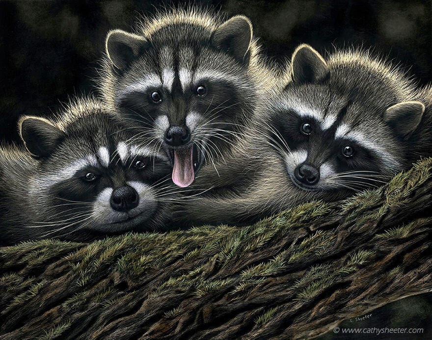 11-Three-Raccoons-Cathy-Sheeter-Wildlife-Scratchboard-Drawings-www-designstack-co