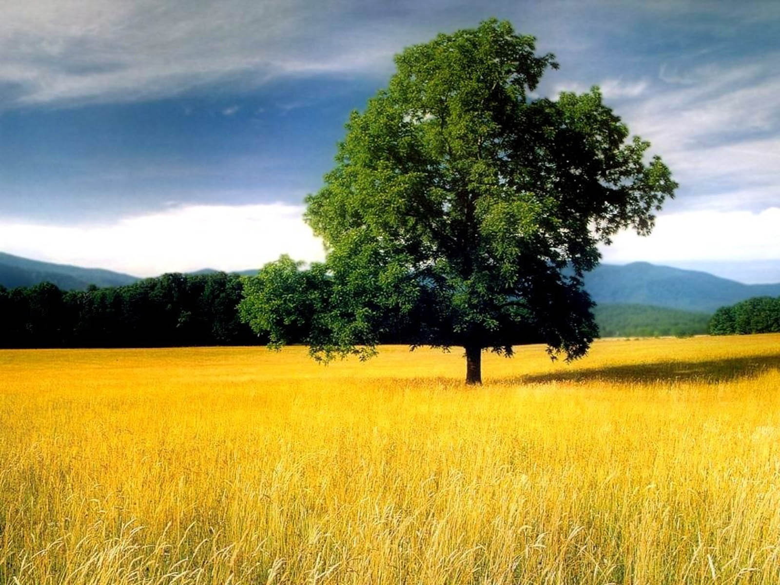 Wallpapers tree in field - Pretty nature backgrounds ...