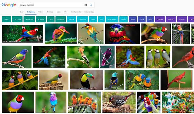 Se muestran los cambios en los resultados de búsqueda de Google Imágenes