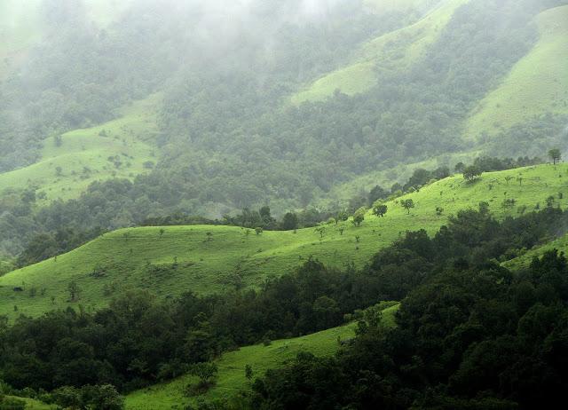 Shola-Forest-Nilgiri