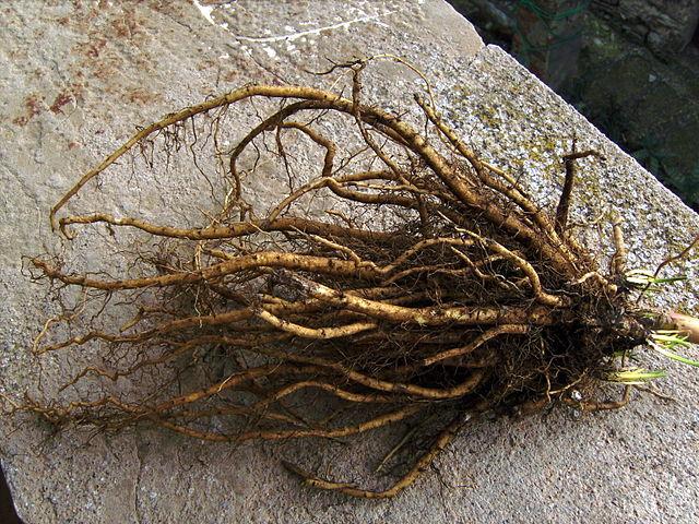 Marsh Mallow root